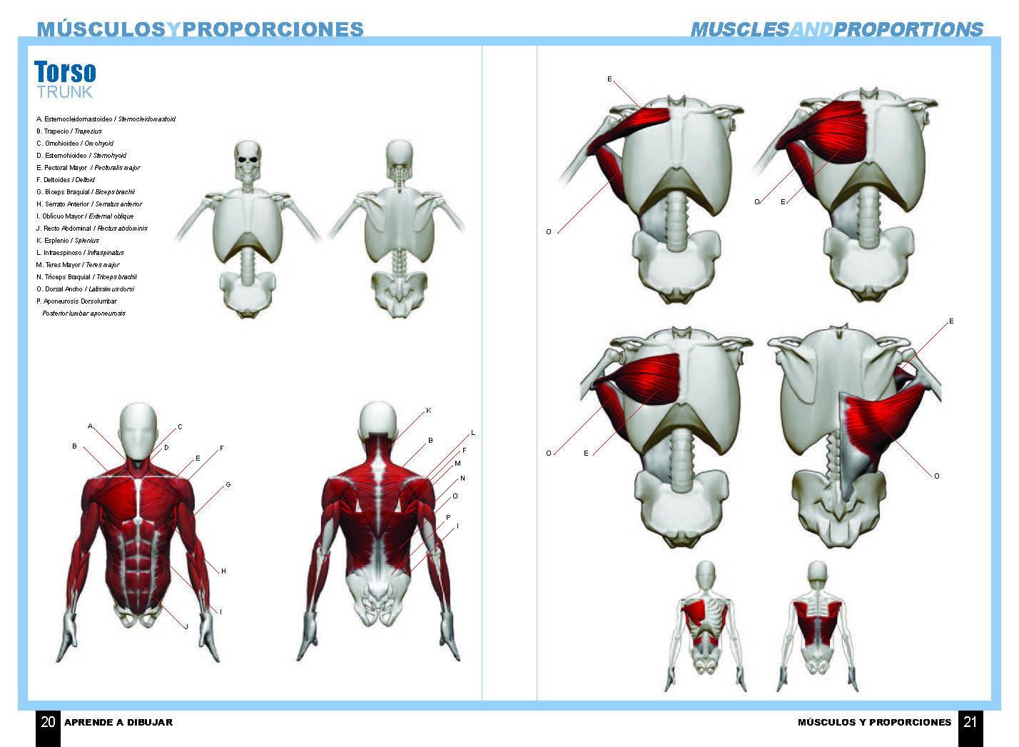 Aprende a dibujar cómic: Anatomía de superhéroes – Dolmen Editorial